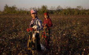 Two children picking cotton in Uzbekistan