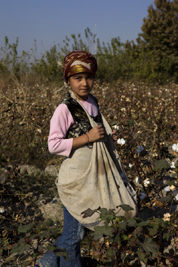 A young girl picks cotton with her mother in a village near Bukhara