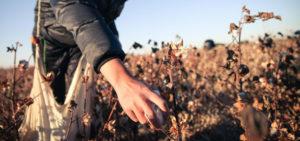 Forced labour in Uzbekistan in cotton field