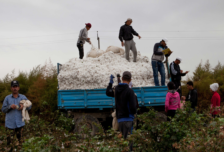 forced labour in uzbek cotton fields
