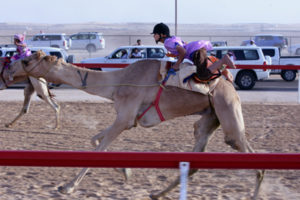 child racing on a camel in UAE