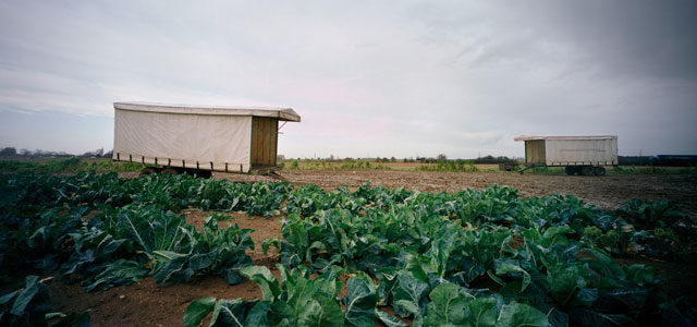 photo of a field growing vegetables to illustrate modern slavery today