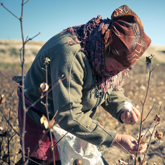 young woman in uzbek cotton field