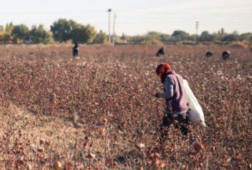 Uzbekistan cotton worker