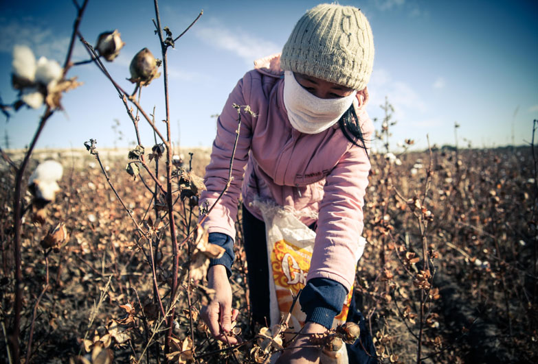 Young woman picking cotton in Uzbekistan wearing face mask