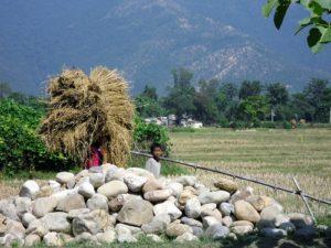 children in Nepal, bonded labour