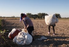Uzbekistan cotton harvest people carry heavy sacks of cotton