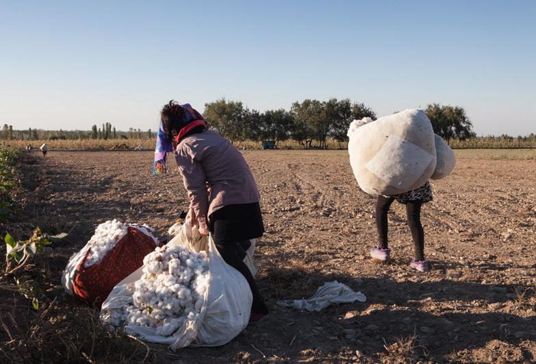 Uzbekistan cotton harvest people carry heavy sacks of cotton