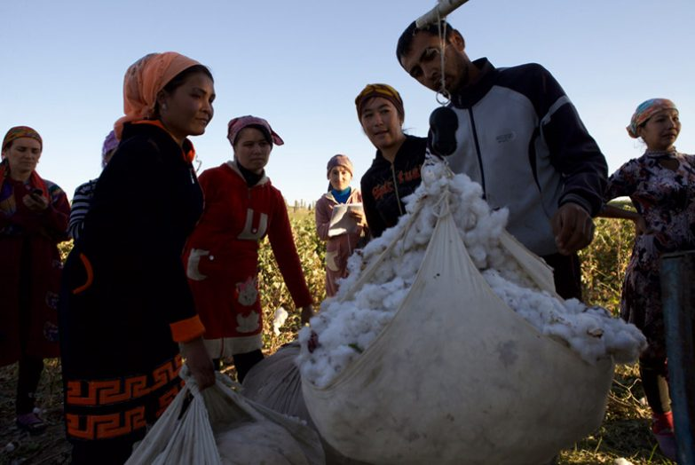 Uzbekistan forced labour in cotton