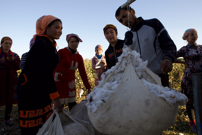 Forced labour in the cotton industry in Uzbekistan affects global supply chains