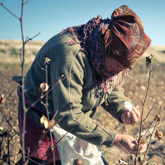 Uzbekistan forced labour in cotton industry