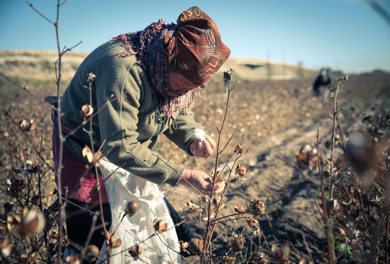 Cotton Crimes: Forced labour in Uzbekistan's cotton industry