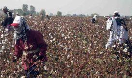 people picking cotton