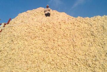 Pile of cotton Turkmenistan
