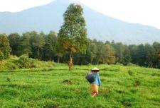 nepal field worker