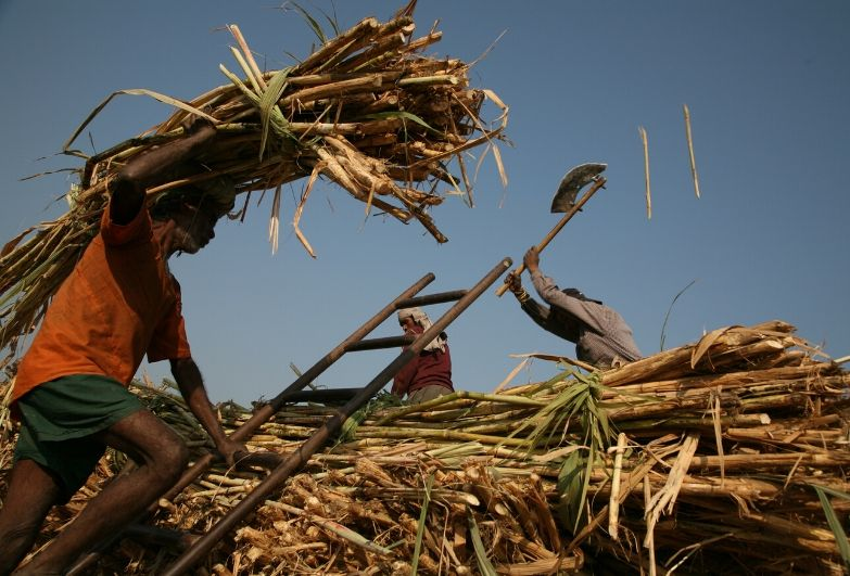 worker carrying straw